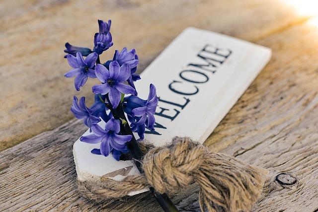 hyacinth-773379_640
