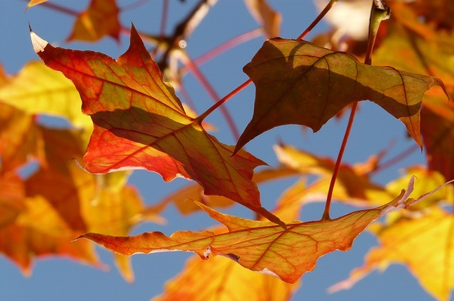 一押しの季節、黄金の秋