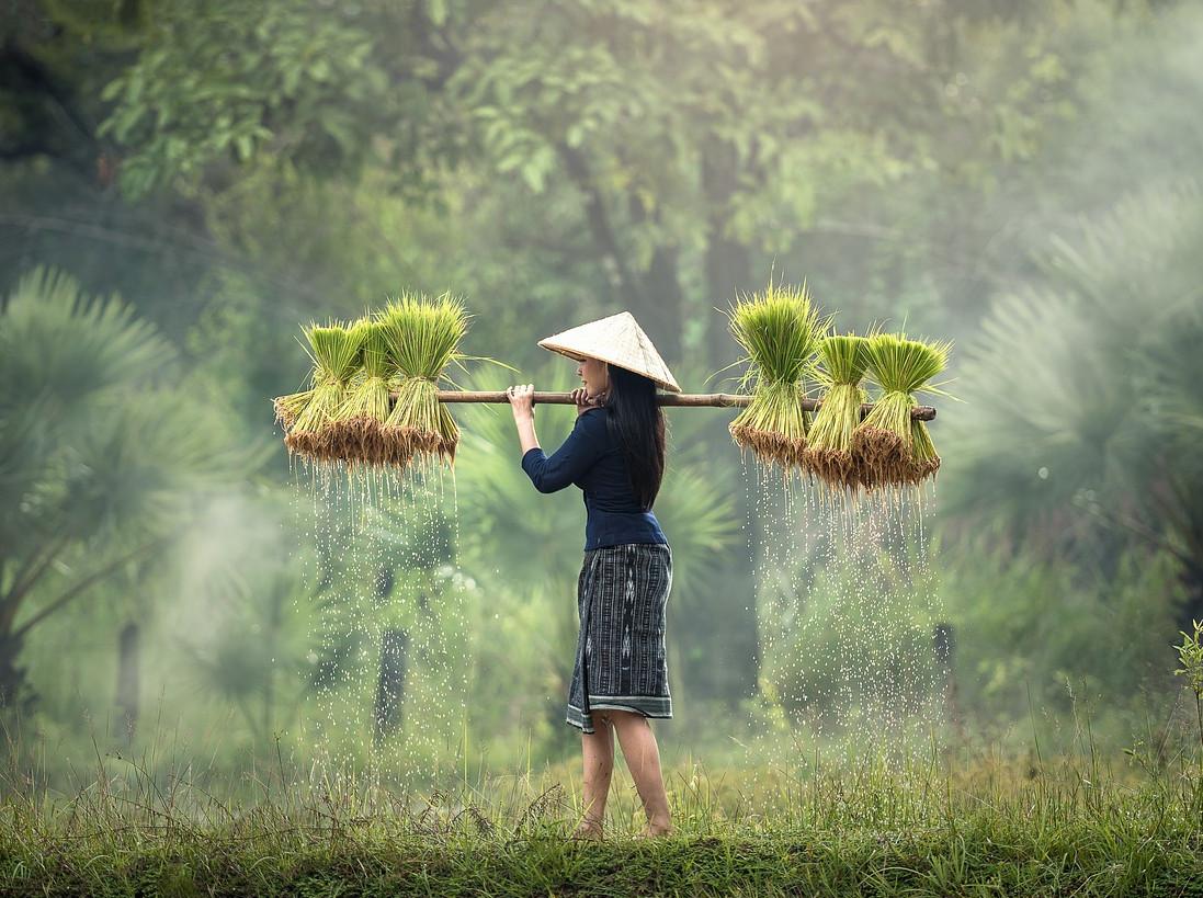 ジャスミンライスの別名は香り米