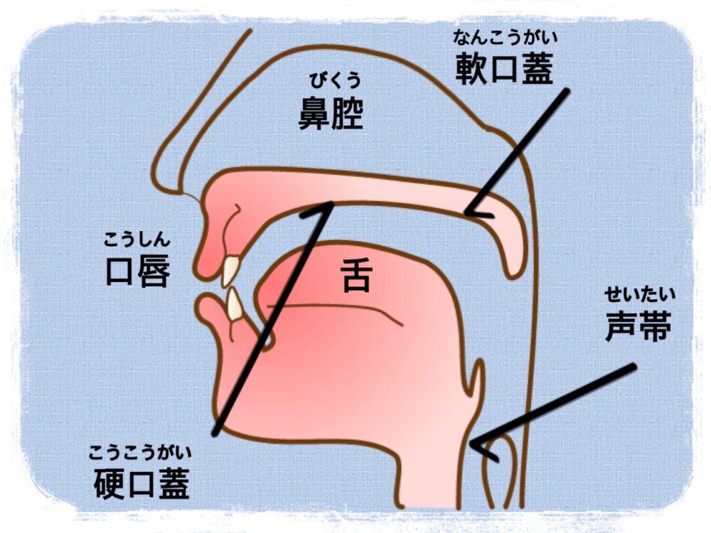 口腔断面図